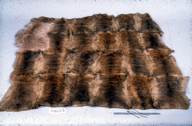 Possum Skin Cloak collected from Lake Macquarie by US Exploring Expedition 1839.  Smithsonian Institution
