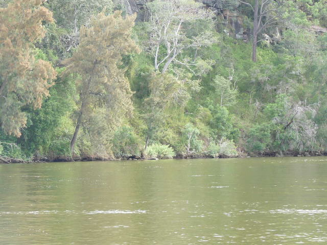 Bents Basin, Gulger, Nepean River